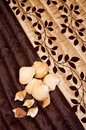 Shells on a brown bed cover. Royalty Free Stock Photos