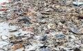 Shells On Captiva Island, Flor...