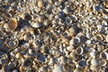 Shells close up lots of at black sea Stock Images