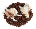 Shells in coffee beans Royalty Free Stock Image