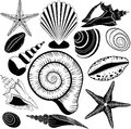 Shells collection. Vector set with seashells and starfish Royalty Free Stock Photo