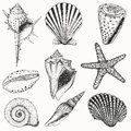 Shells collection vector set with seashells and starfish for you design and scrapbooking Royalty Free Stock Photography