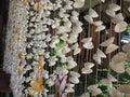 Shells curtain.
