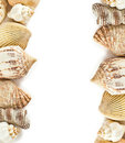 Shells frame on white with different background Royalty Free Stock Photos