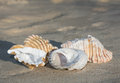 Shells on full sand background Royalty Free Stock Photo
