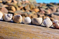 Shells on line lying on a plank at sea Royalty Free Stock Image
