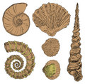 Shells of marine fauna Stock Images