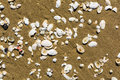 Shells of molluscs sea washed up on the beach Stock Photos