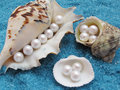 Shells and pearls Stock Photography