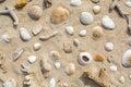 Shells on the sand beach Royalty Free Stock Photo