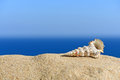 Shells on sandy beach in the background of sea and sky Royalty Free Stock Images