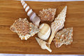 Shells sea on a wooden board Stock Images