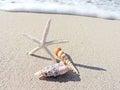 Shells and star fish at the beach Royalty Free Stock Photo