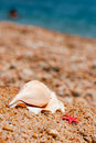 Shells and starfishes at the beach Royalty Free Stock Photography