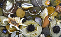 Shells and stones under water background of marine bottom with Royalty Free Stock Image