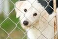 Shelter Dog Royalty Free Stock Photo