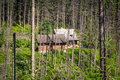 Shelter in the forest of tatra mountains poland Royalty Free Stock Photos