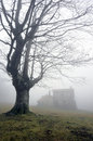 Shelter and a tree with fog Royalty Free Stock Photography