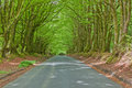 Sheltered rural road by a canopy of overhanging beech trees fagus sylvaticus at springtime in north devon uk Stock Photography