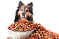 Sheltie and dog food bowl Stock Images