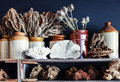 Shelves with decorative objects corals and sea shells Royalty Free Stock Photography