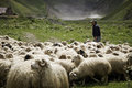 Shepherd and flock of sheep on a background mountains in georgia Stock Photo