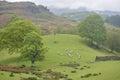 Shepherd herding sheep on Coniston Fells