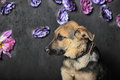 Shepherd puppy on a background of flowers Royalty Free Stock Photos
