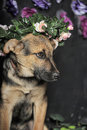 Shepherd puppy in a wreath of small roses Royalty Free Stock Photography