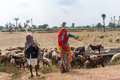 Shepherds along the road in the desert of rajasthan india circa february man and woman with their flock Stock Photo