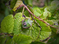 Shield bug a insect on a leaf Stock Photography