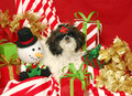A Shih Tzu and Christmas Presents Stock Photography