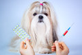 Shih tzu dog treatment focus on Stock Photo