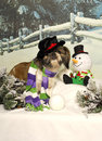 Shih Tzu and Snowman Stock Photos