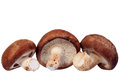 Shiitake mushroom isolated on white background Stock Image