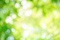 Shining defocused highlights in trees