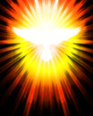 Shining dove with rays Stock Photography
