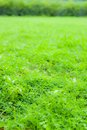 Shining grass Stock Images