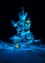Shining lights of a natural christmas tree covered snow new years night black outdoor background Stock Image