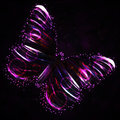 Shiny butterfly Royalty Free Stock Images