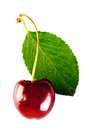 Shiny ripe cherry Royalty Free Stock Photo
