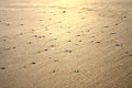 Shiny sand texture beach under sunset sky Royalty Free Stock Photography