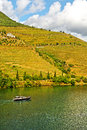 Ship vineyards in the valley of the river douro portugal Royalty Free Stock Image