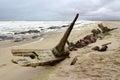Ship Wreck in Skeleton Coast