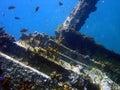 Ship Wreck Virgin Islands, Caribbean Stock Photo