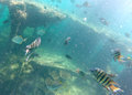Shipwreck at tangalooma moreton island diver s eye view Stock Image