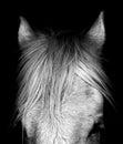 Shire Horse - Norfolk UK Royalty Free Stock Photo