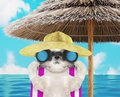 Shitzu dog sunbathing on a beach chair and looking through binoculars. 3d render