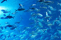 Shoal of fish Royalty Free Stock Photo