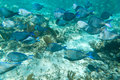 A shoal of fishes in Caribbean Sea Stock Images